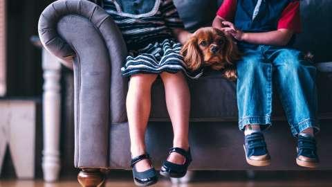 6 полезных советов родителям, чьи дети умоляют завести щенка