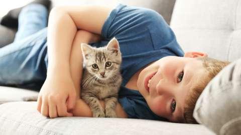5 причин завести дома котенка