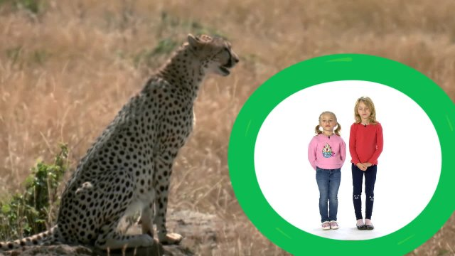 Даша и Саша представляют программу «Животные — мои друзья»