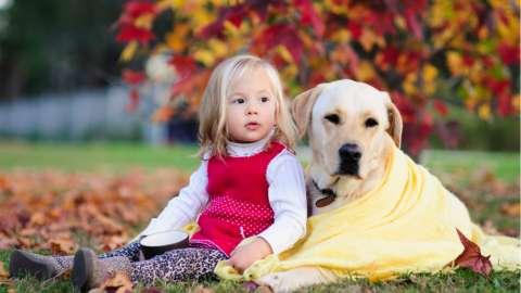 Канистерапия: как могут лечить собаки