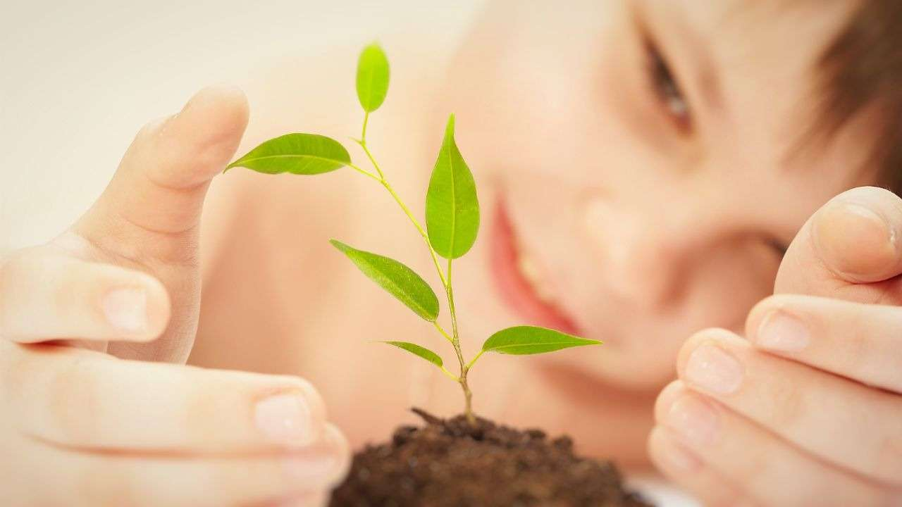 С детства увлекаясь живой природой, всю свою жизнь Линней посвятил изучению растений. Результатом этого стала система их классификации