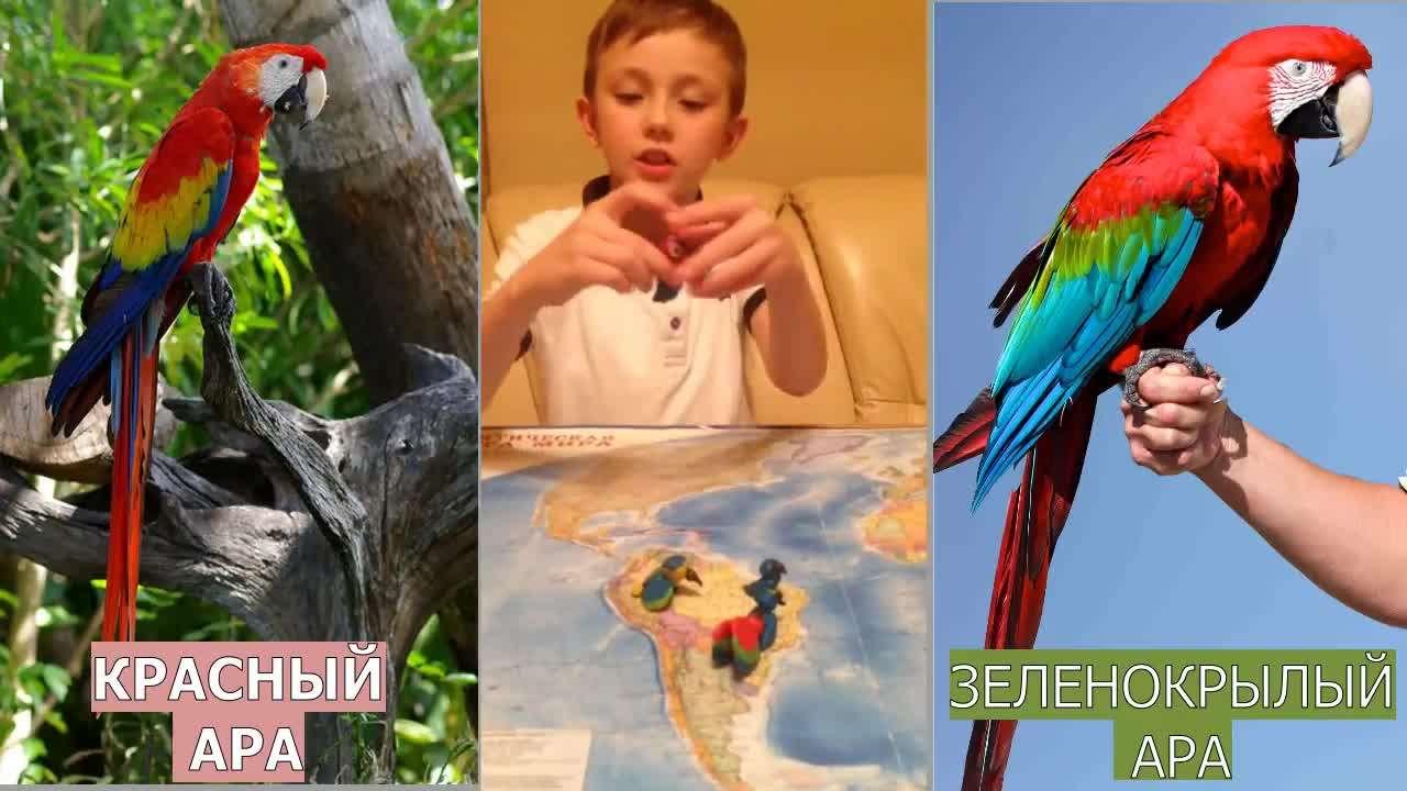 Передача Гриши, посвященная птицам Северной и Южной Америки