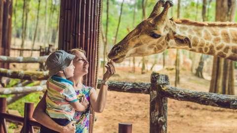 Жираф на день рождения: как стать опекуном животных в зоопарке