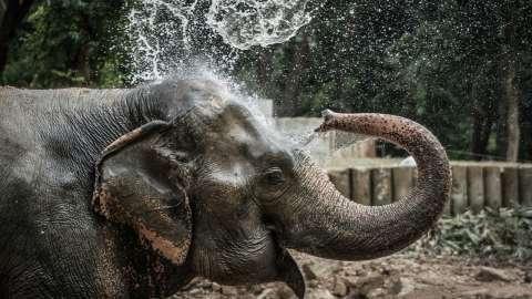 Один день со слонами