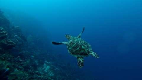 7 удивительных фактов о море