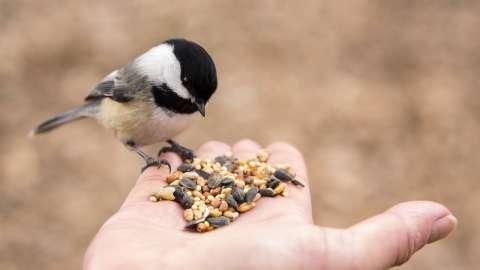 Заботясь, не навреди: чем и как можно кормить птиц зимой?