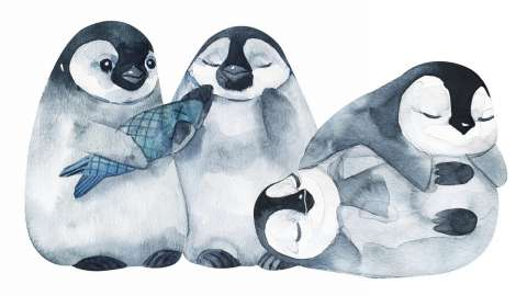 Изучаем окружающий мир: как живут пингвины