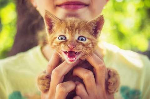 Всемирный день кошек на телеканале «О!»