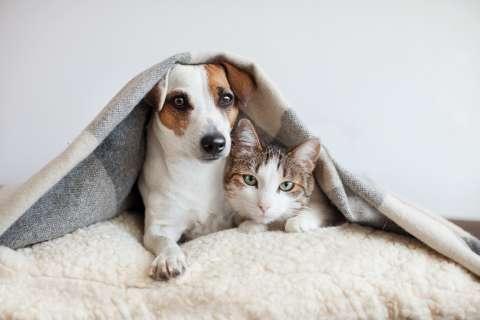 День бездомных животных на канале «О!»: 5 историй с хорошим концом