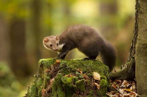 Дарвиновский музей отмечает Всемирный день защиты животных