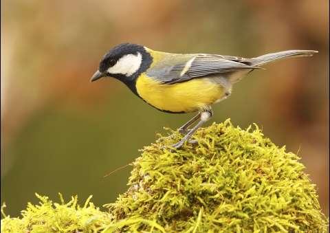 11 птиц с суперспособностями