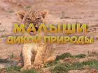 «Малыши дикой природы» (0+)