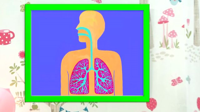 Выпуск 3. Дыхательные пути